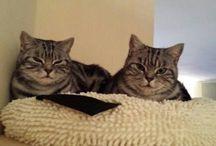 Fellnasen / Katzen