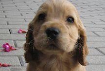 Puppies..
