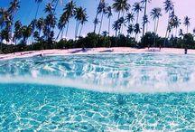 tropical bliss / Tudo que seja tropical e lindo de se ver no clima verão.
