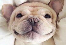 pets / Todos os animais mais fofos do mundo!