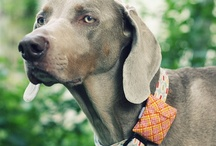 Dog DIY / We like to be crafty-- http://pitlandia.blogspot.com/