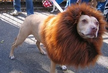 Dog Halloween Costume Inspiration