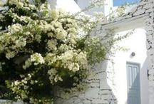 Greek Beauty / Greek beauty