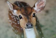 Animaux / Un tableau qui changera la vision de la nature, une beauté si grande qu'elle nous rend sensible sur des animaux si touchant.
