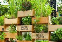 Urban Gardening / by Sarah Walker