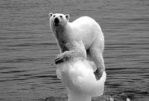 planet O earth / umweltschult, naturschutz, protect the pleanet, erde, welt, lebensraum