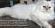 Sweet Purrfections / Truffle and Brulee are two Silver Shaded Persians from South Carolina. Join us as we share our daily lives as Southern Sweet and Sassy ladycats.