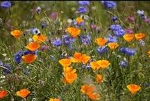bloemenweide tuin / Prachtige bloemenweide met een selectie van prachtige bloemen - Esselink Hoveniers