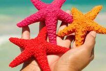 Collection: Beach