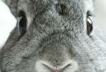 Bunny Blessings / by Deb Stowe