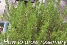 Garden: Herbs/Leaves