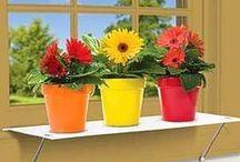Garden: WindowBoxedPlant