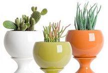 Garden: Indoor Plant