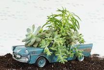 Planters / by Elisa Chia