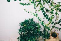 Green Green ♥ / Plants!