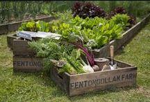 Summer at Fentongollan Farm - 2014