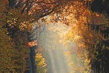 nu is het herfst de bladren vallen