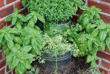 Yard ideas / Vertical gardening for my patio