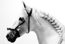 P H O T O ~ equus / .... gorgeous pictures of all breeds of the noble horse / by horsegirl1913