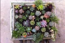 Garden & Patio / by Tamra Green