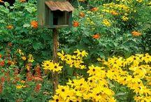 Country Gardening ideas / by Tina Glenn