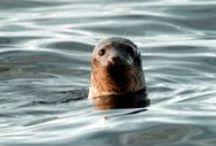 Animal photos / Animals around the globe, cute photos.