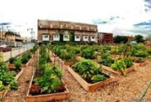 community gardens / wouldn't it be fun to start this at FUMC?