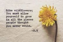 Seed for the Soul / Words of Encouragement, Comfort & Inspiration