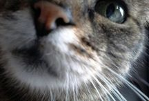 Calvin / Cats