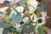 Succulents / by ZuZu's Petals Austin
