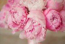 Pretty in Pink / Wedding floral in all sorts of pinks!