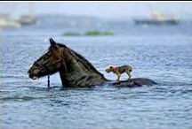 Funny and Touching Animals.
