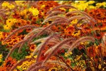 Fall is in the Air / Decorate your home inside and out with mums, pumpkins, gourds, wreaths, flags and more!