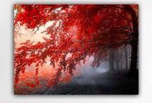Πίνακες σε καμβά | Canvas Prints