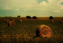 On the Farm / Cows, farming, country, you name it. We are proud of our Wisconsin roots!