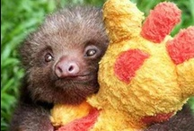 Baby Sloths!  / You're right. This has absolutely nothing to do with protecting your technology.