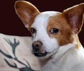 HUNDert Prozent mein PARTNER / Dem Partner Hund hat der Mensch vieles zu verdanken: Die scharfen Sinne des Hundes, sein Teamgeist, seine schnelle Reaktionsfähigkeit zusammen mit der Intelligenz und der Kreativität des Menschen haben aus beiden ein im Tierreich wahrhaftig einzigartiges und unschlagbares Team gemacht. Eben HUNDert Prozent mein PARTNER.