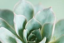 minty fresh / by fennel&fox photography
