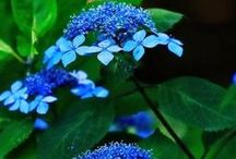 Plants & Shrubs / by jo eyer
