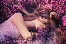 lavender love / by fennel&fox photography