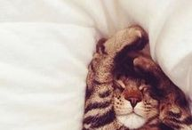 Animal sleeping / Each one has its own style!