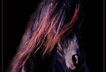 Horses /