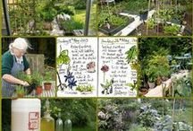 Ann's Cotswold Acre / Ongoing images of our garden, orchard, veg plot and wilderness which we have been creating - and neglecting - since 1969. (Situated in a cold location in the north Cotswolds, England.)