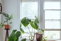 Dream Home Ideas / interior inspiration for my future home
