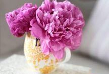 Peonies, my favourite flowers!