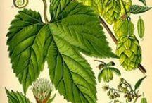 Natura Ilustraciones / Nature Illustrations