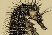 Bajo del Mar Ilustraciones / Under Sea Illustrations