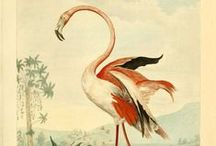 Fauna Ilustraciones / Fauna Illustrations