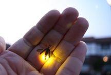 Beetle, Spider