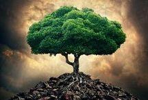 Деревья (Trees)